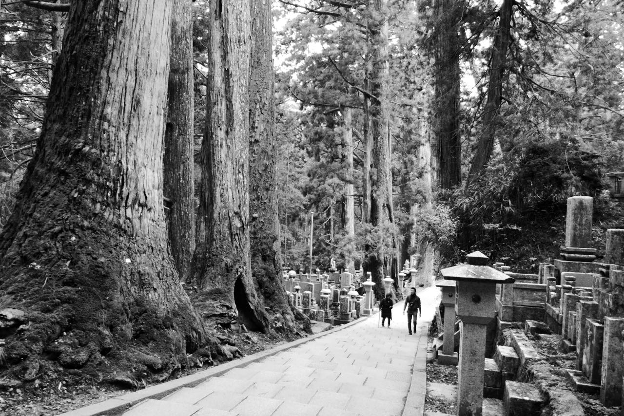 Hunderte Jahre alte Baumriesen in Koyasans Friedhof Okunoin