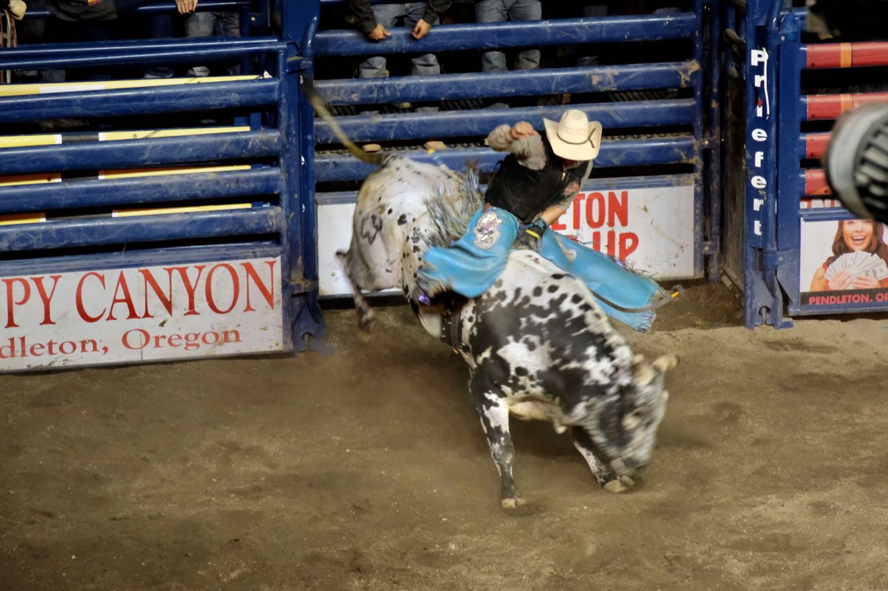 Pendleton Profi Bull Riding