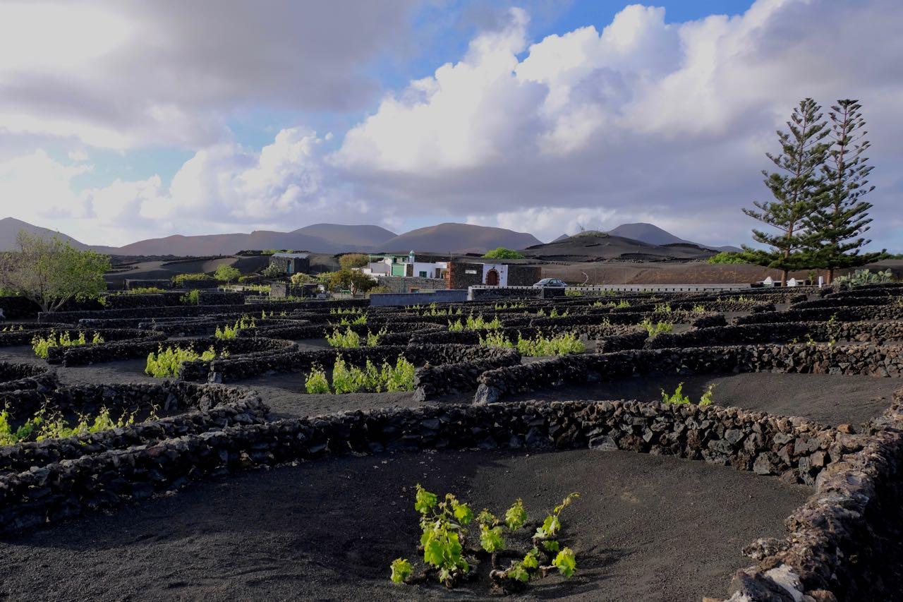 Lava Weinfelder La Geria Lanzarote
