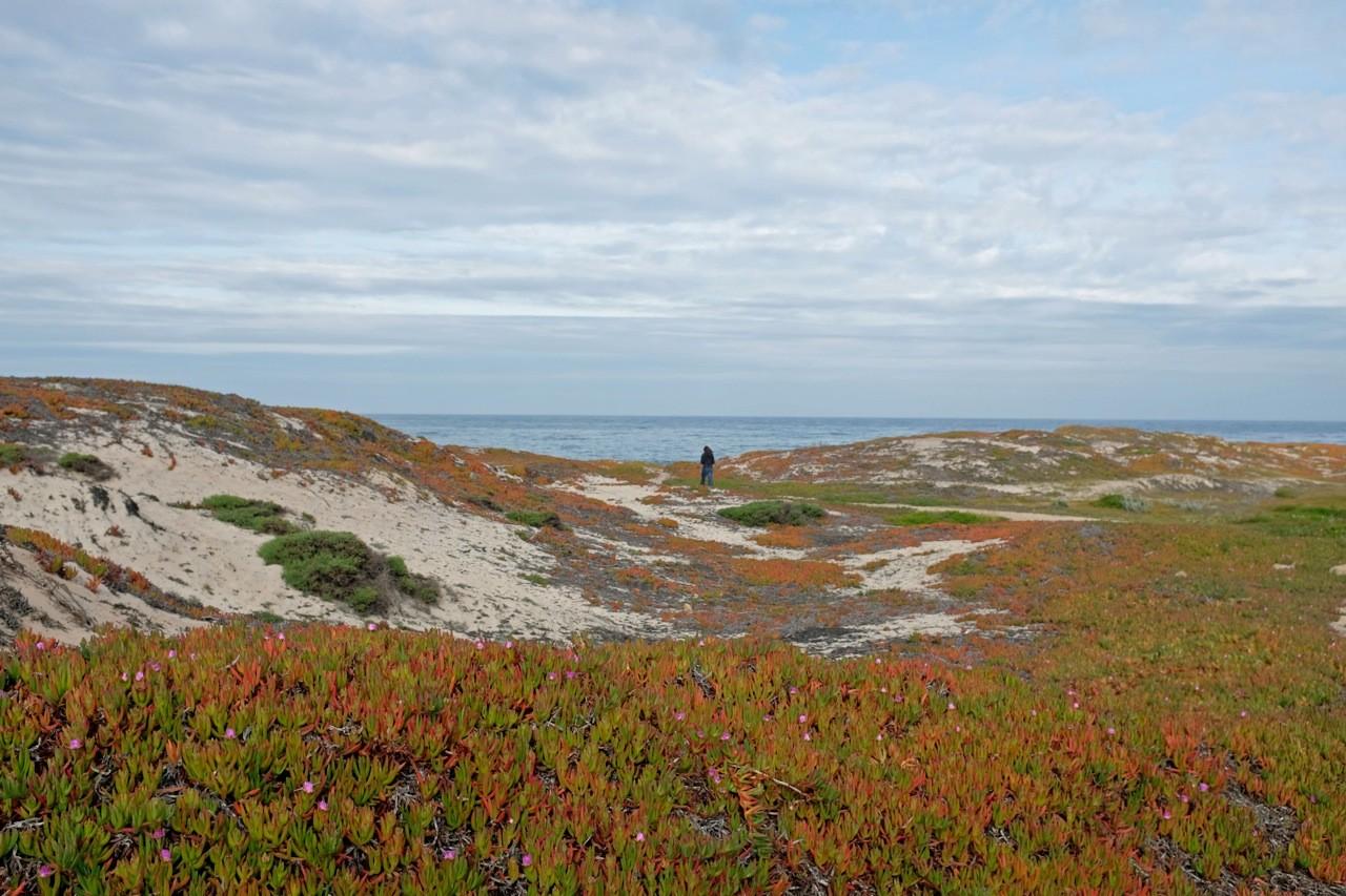 Frühjahr in Pacific Grove, Monterey Peninsula