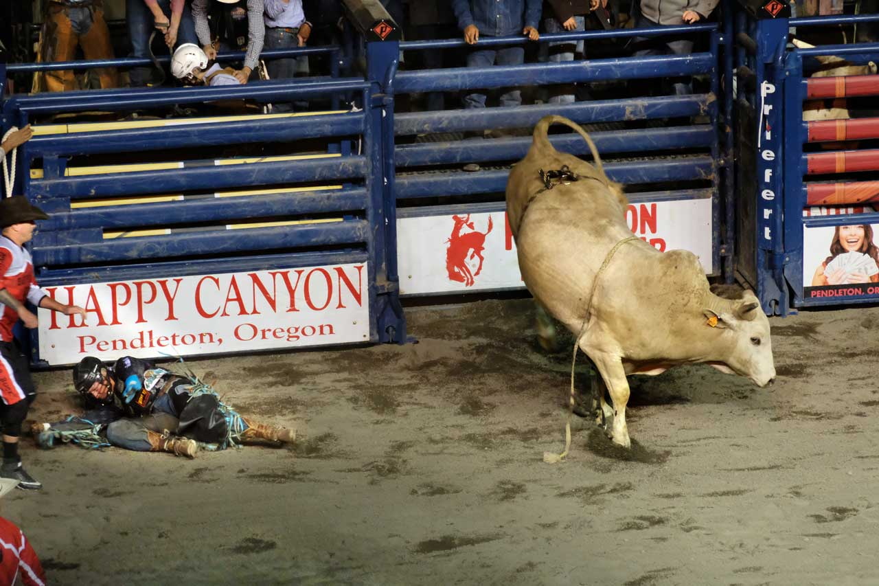 Bull Riding in Pendleton