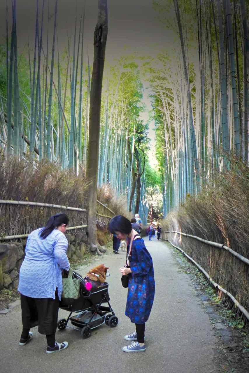 Beliebtes Ausflugsziel von Kyoto: Arashiyama Bambuswald