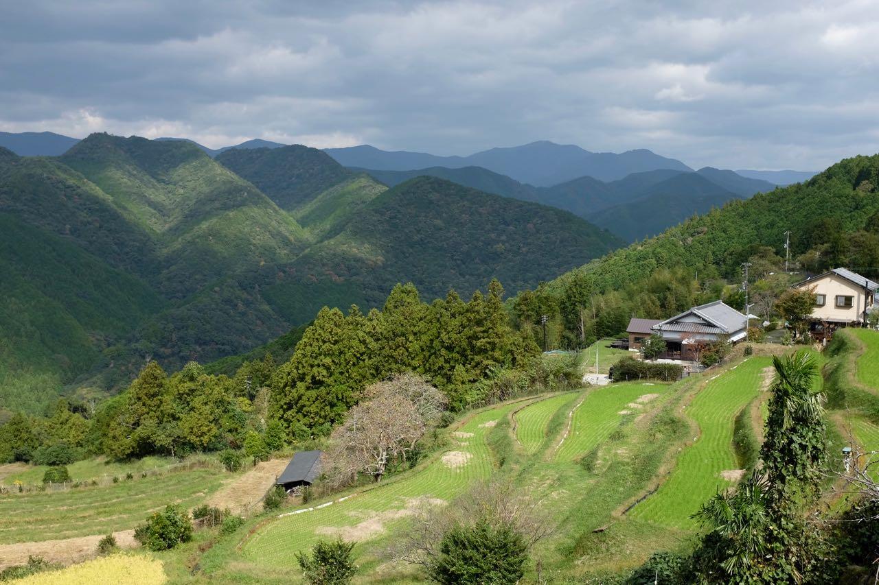 Weilermit Reisterrassen zwischen den Kumano Kodo Wäldern