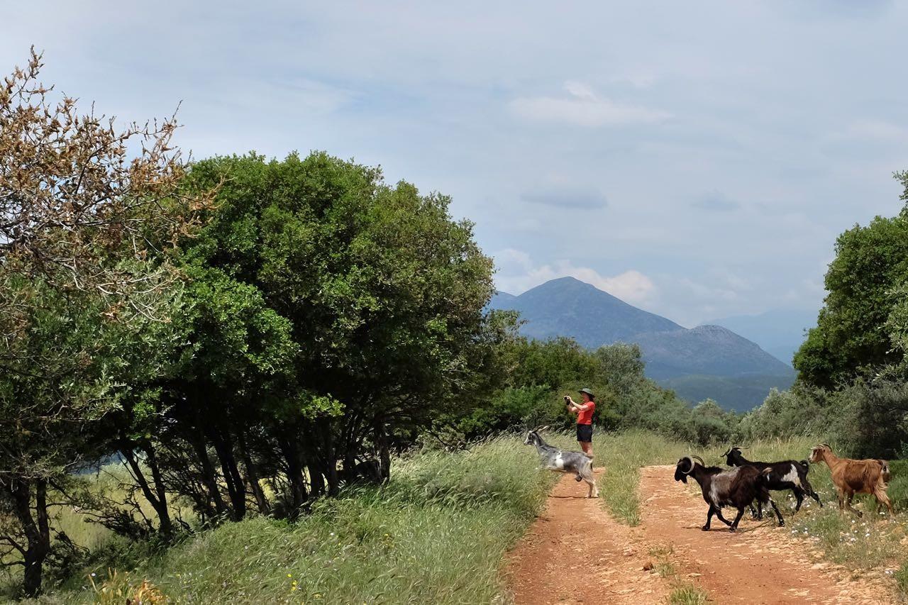 Auf der antiken Mykensichen Straße  Peloponnes