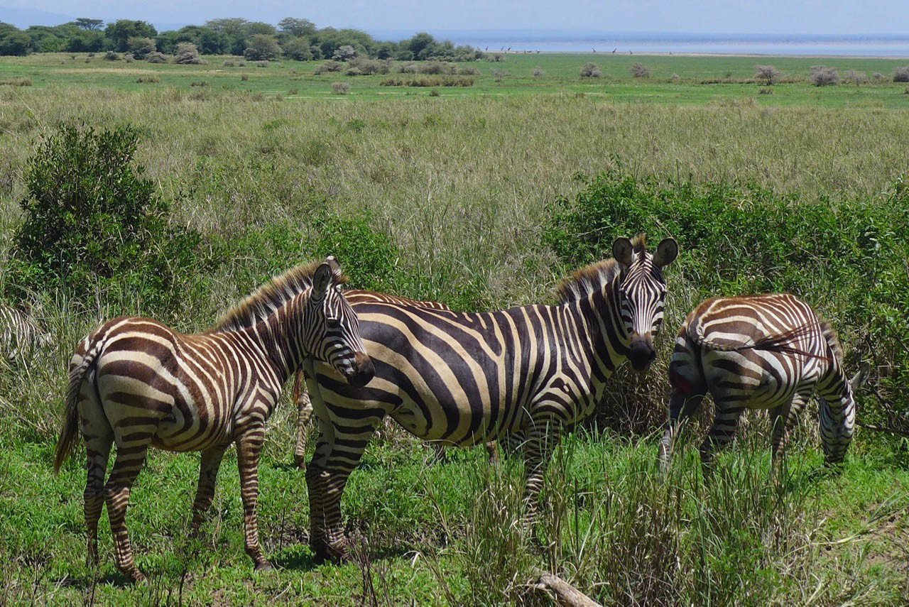 Lake Manyara Nationalpark