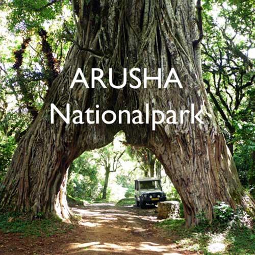 Reisebericht Tansania Arusha Nationalpark Reiseblog