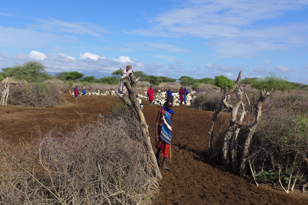 Der Eingang zur Boma, dem Massai Dorf