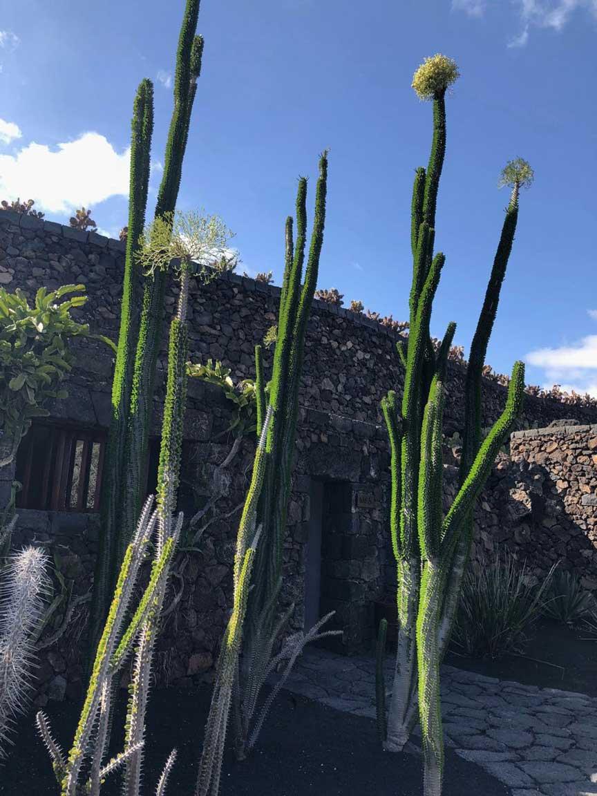 Cesar Manrique Jardin de Cactus Kakteengarten Lanzarote Guatiza