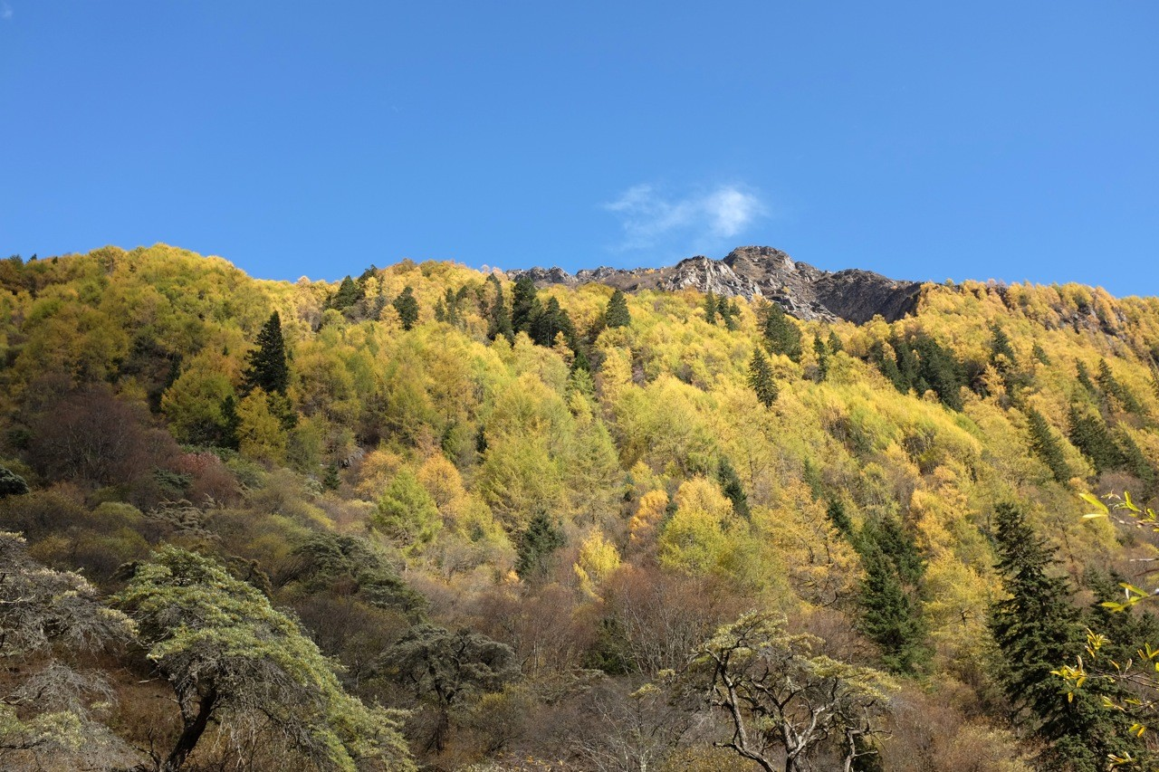 Oktober im Changping Valley, Mount Siguniang Nature Reserve