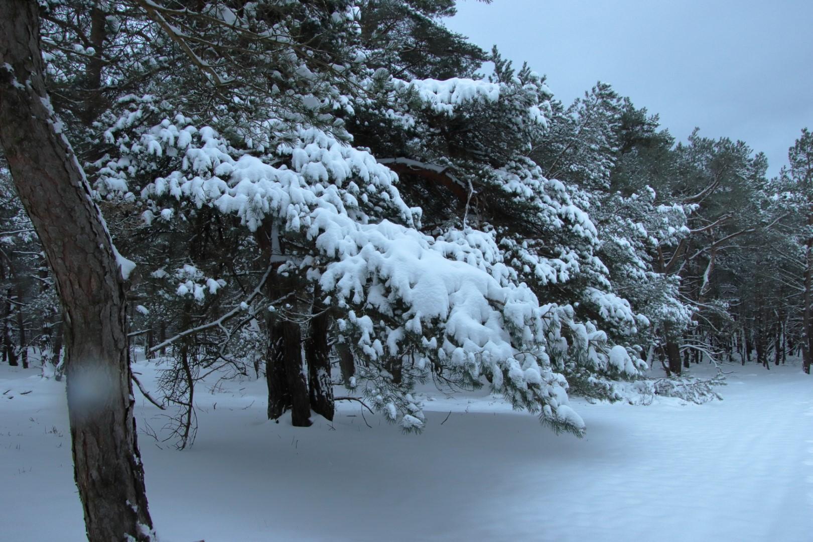 Winter... rijp, sneeuw en ijs..
