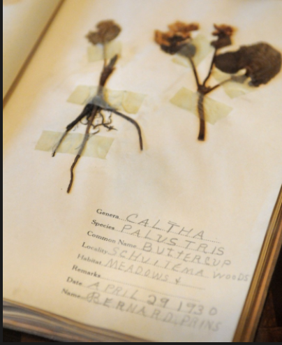 A student's nature field collection book, on display inside the newly renovated original New Groningen School. (Cory Olsen | The Grand Rapids Press)