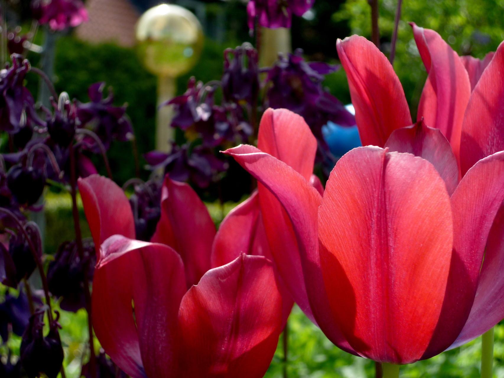 Pfarrscheune Hagen, Garten, Blumen