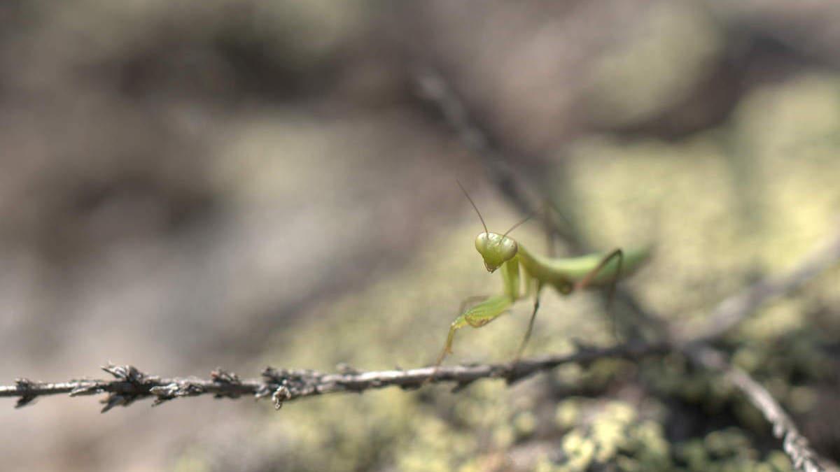 L'été appartient au micro-peuple des insectes et à ceux qui auront apporté la loupe pour observer de plus près