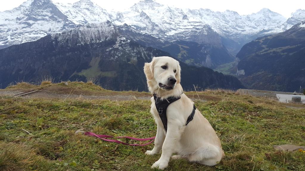 Bajla in den Bergen