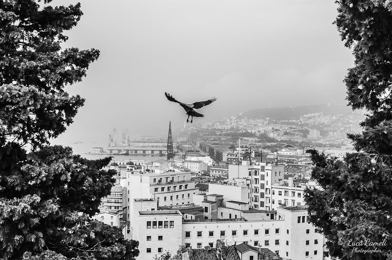 """""""Volando Su Trieste"""",  (Scorcio di Trieste vista dall'alto del Parco della Rimembranza con una gazza ladra che spicca il volo verso il centro della città)"""