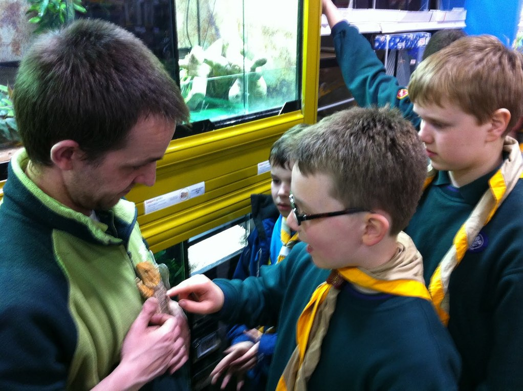 cub scouts and a bearded dragon