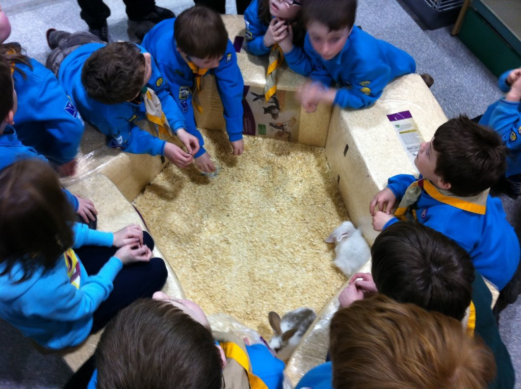 our children learn all about pet care