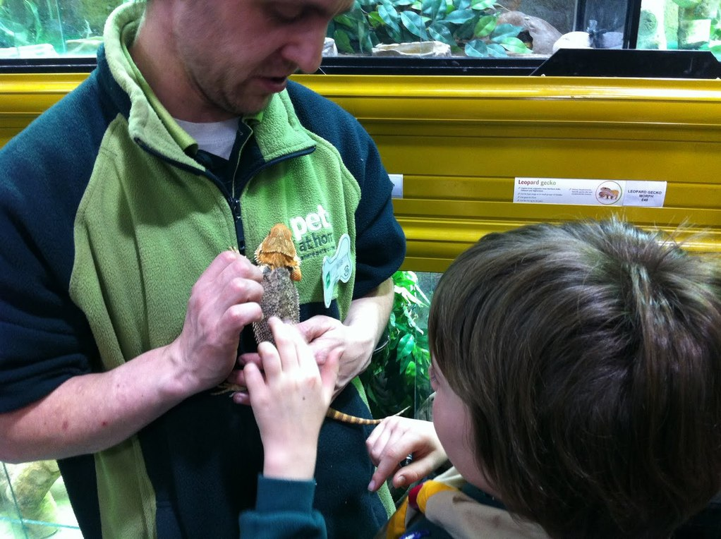 Animal Activity Badge with the Mackay Beavers and Cubs