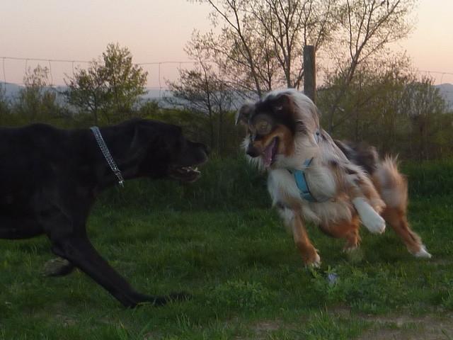 auf die Dogge....
