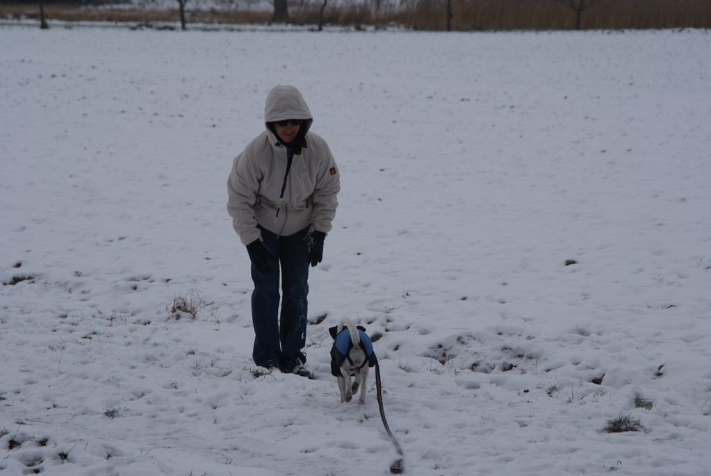 Kommt ein Hund angeflogen...2