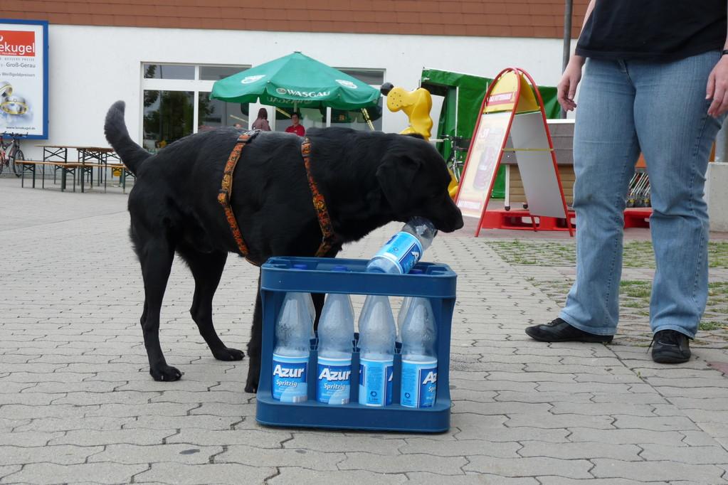 Nanuq räumt Flaschen auf