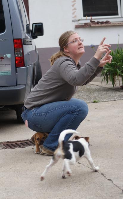 """Gestik"" - ganz wichtig im Umgang mit Hunden"