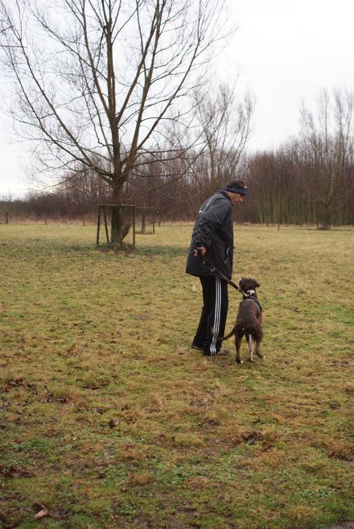 Hundetausch 1 (Kleinpudel gegen Boxer)