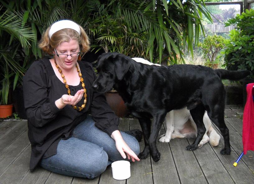 Gleichzeitiges Training mehrerer Hunde