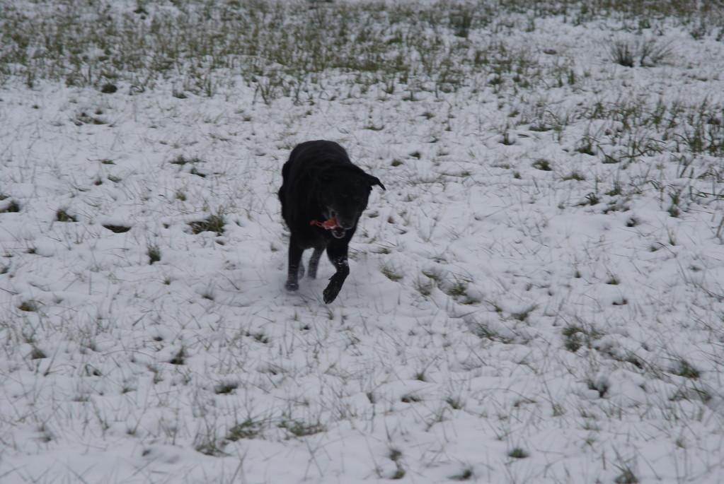 Dummysuche im Schnee