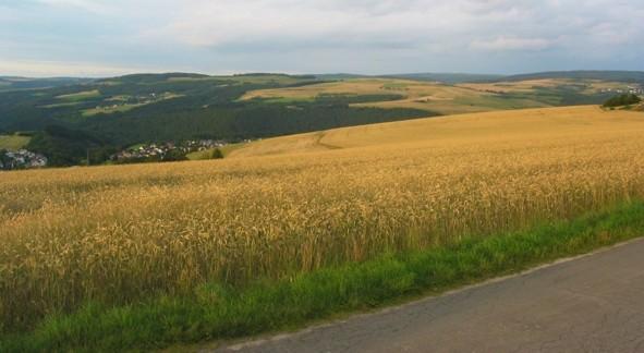 Pluwig. Landwirtschaftliche Nutzfläche (Ackerland/Getreidefelder) unterhalb vom Gertz-Kreuz.