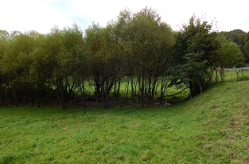 Pluwig. Die letzten 100 m vor der Mündung in die Ruwer fließt der von Bäumen gesäumte Geizenburger Waschbach über eine Weidefläche.