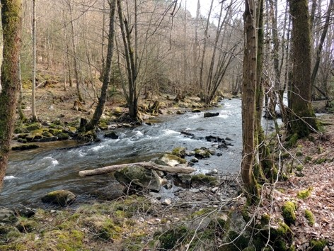 Die Ruwer unterhalb Burg Heid - Mühle (Blick gegen die Fließrichtung)