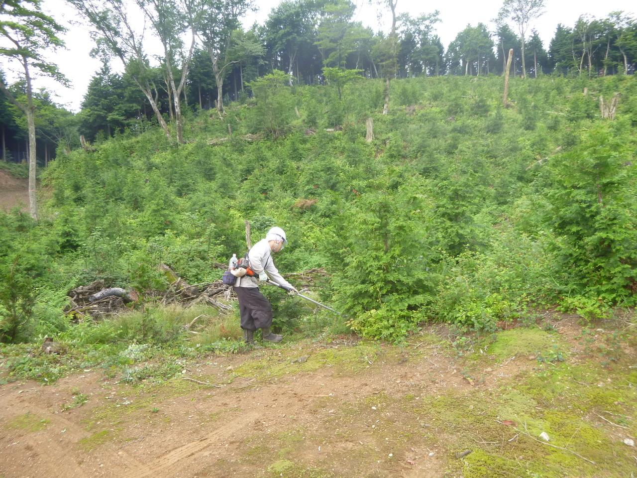 下草刈作業~山の真夏の風物詩とにかく暑い