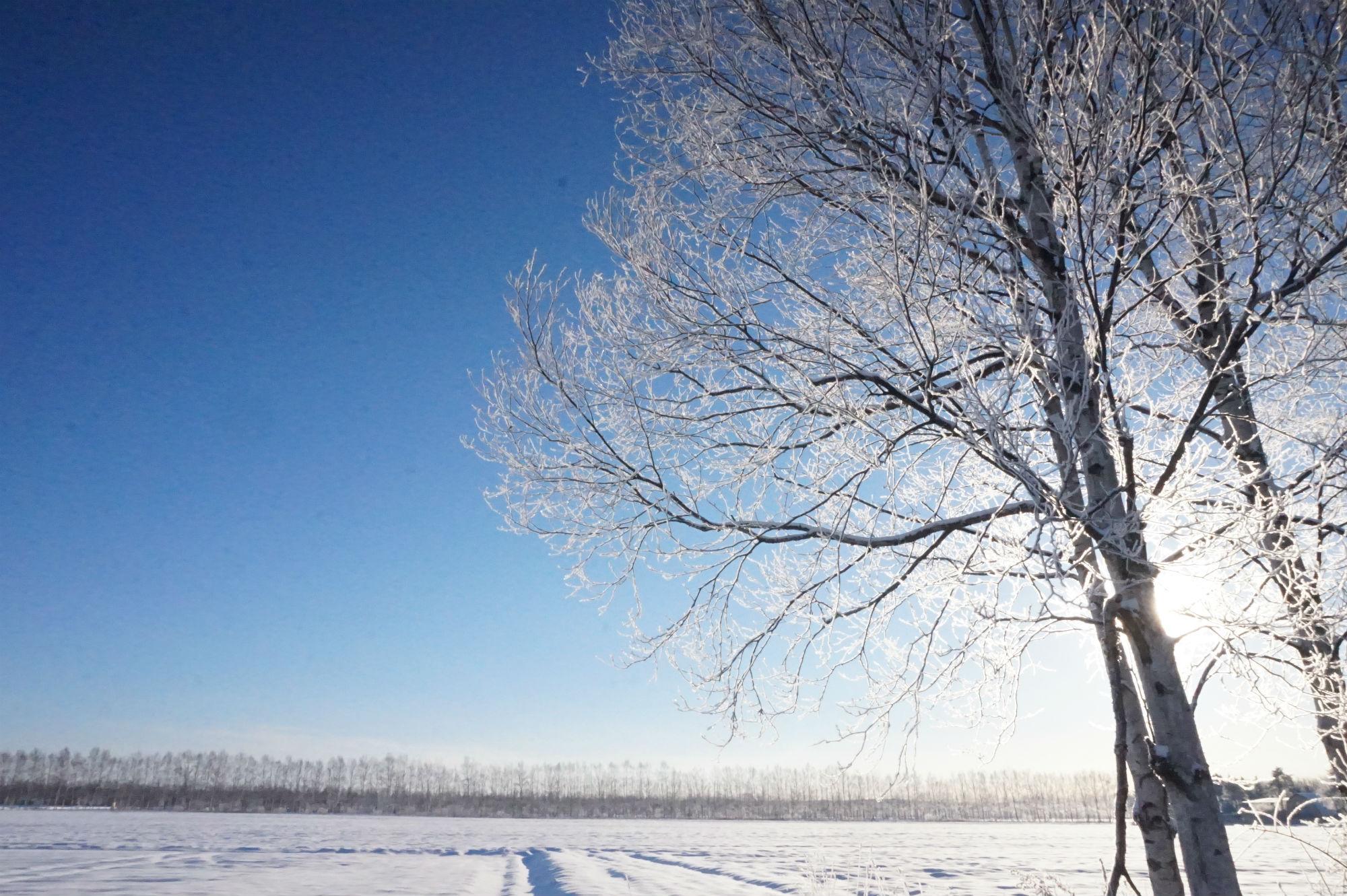 朝日で輝く樹氷