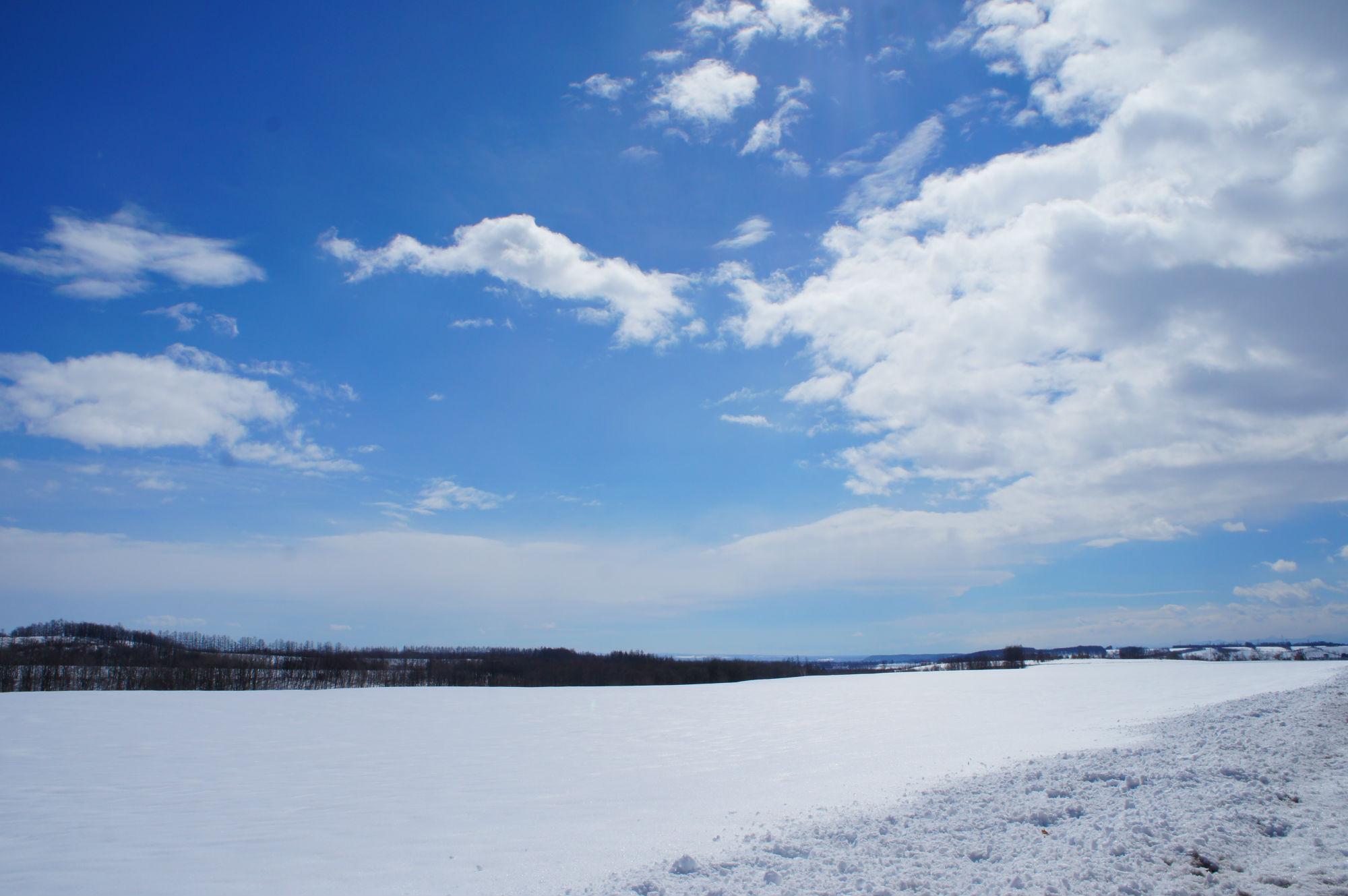 雪に覆われた畑