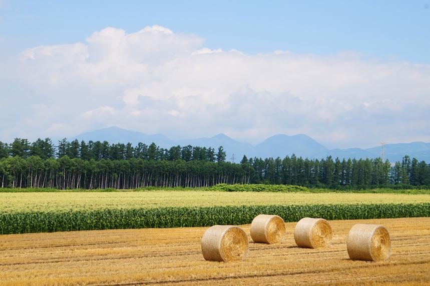 とうもろこし畑と麦稈ロール
