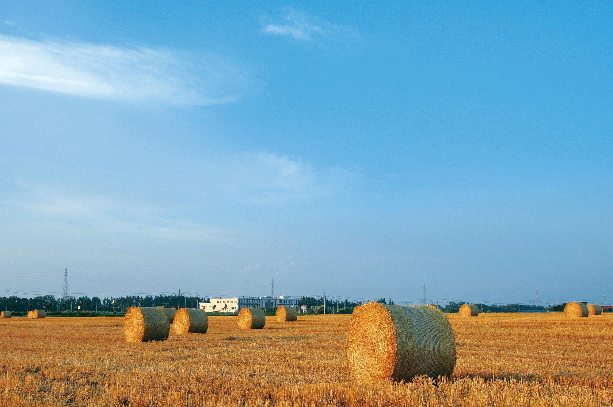 牧草ロール畑