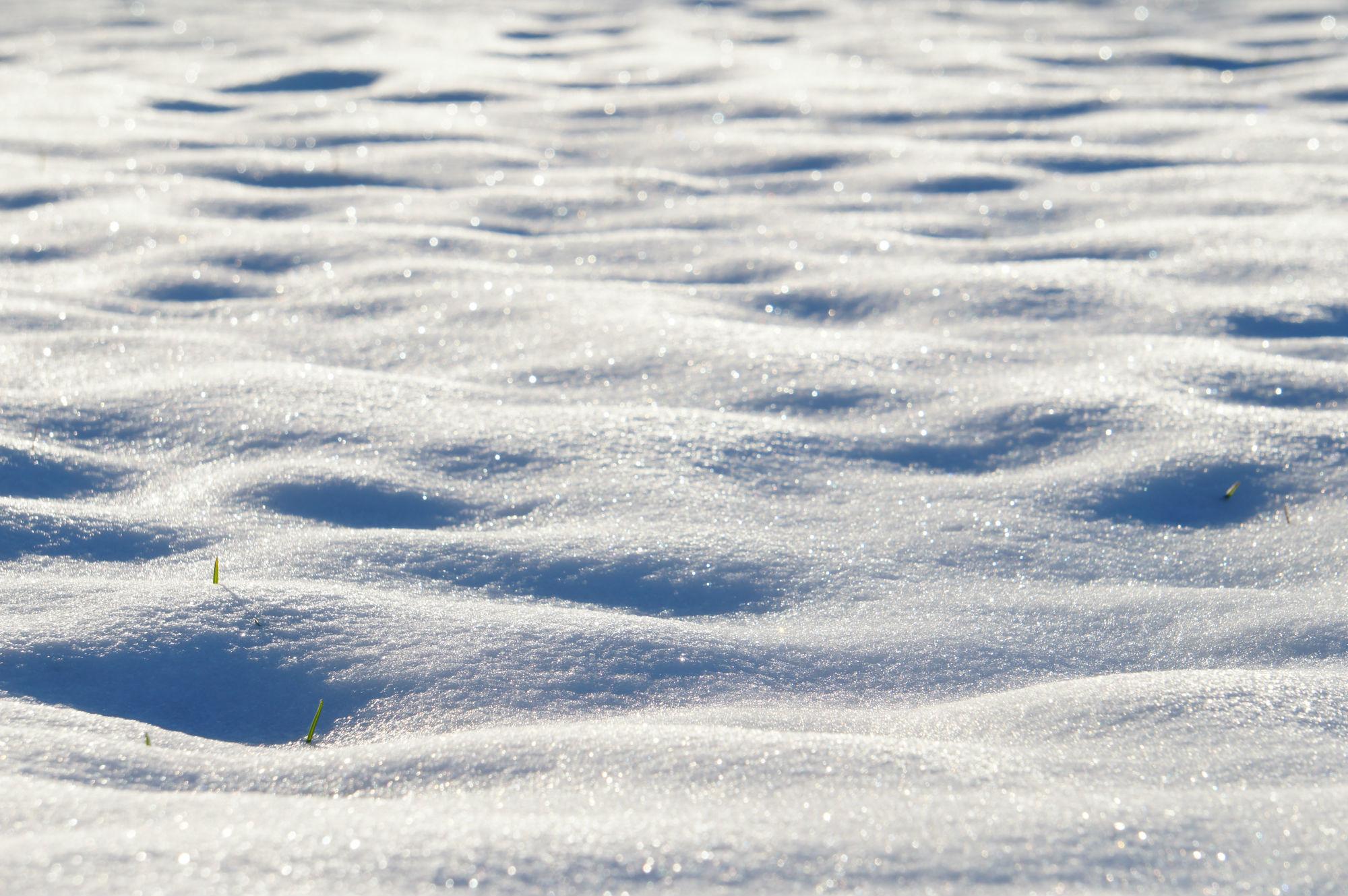 畑に積もった新雪