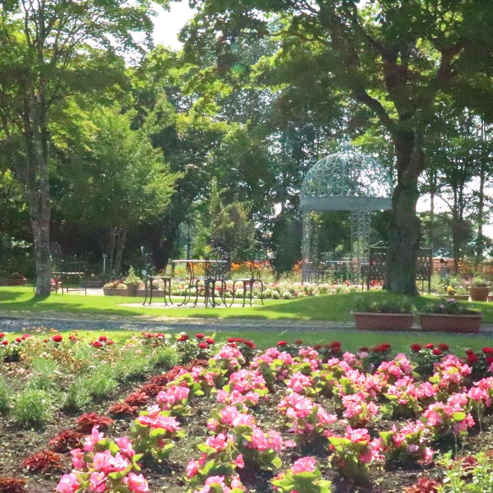 スイートピアガーデンの庭