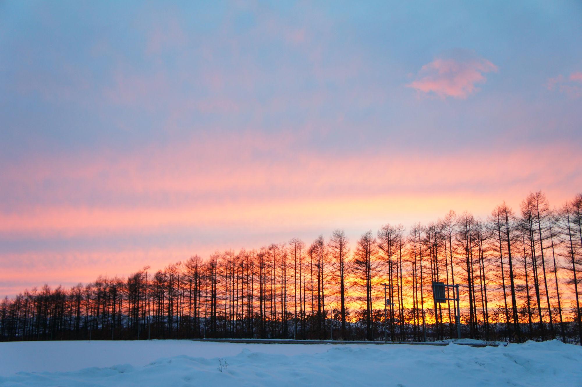 防風林と夕焼け