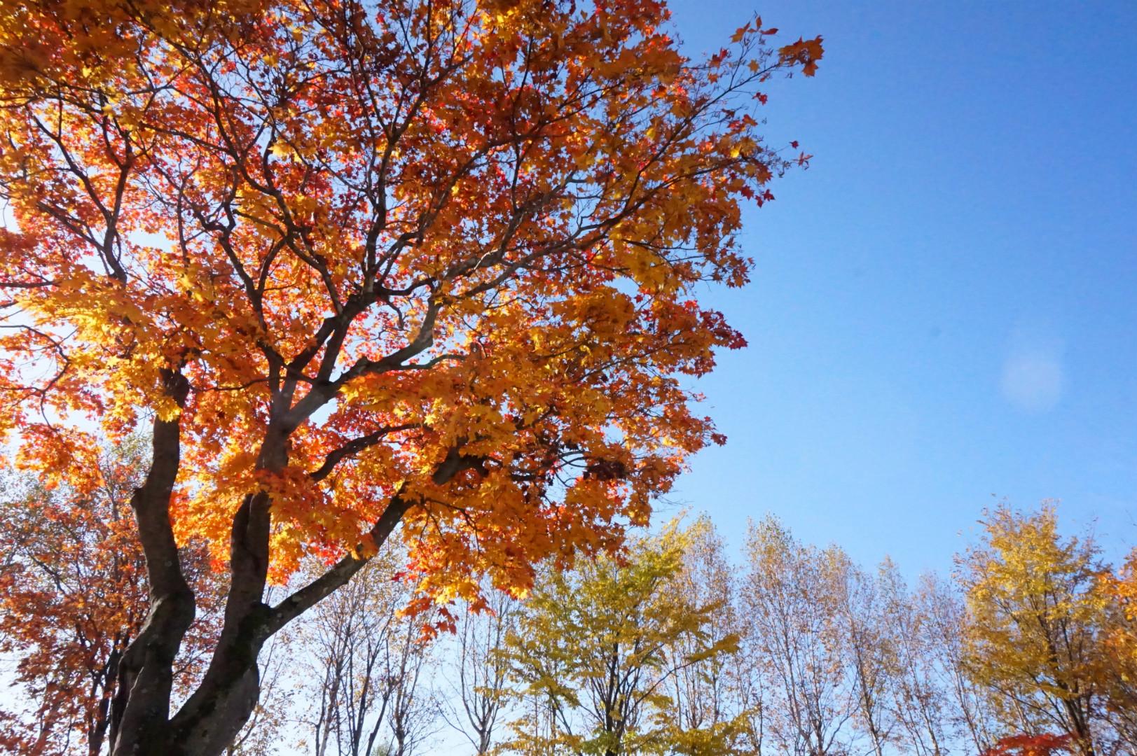 スイートピアガーデンの庭の紅葉