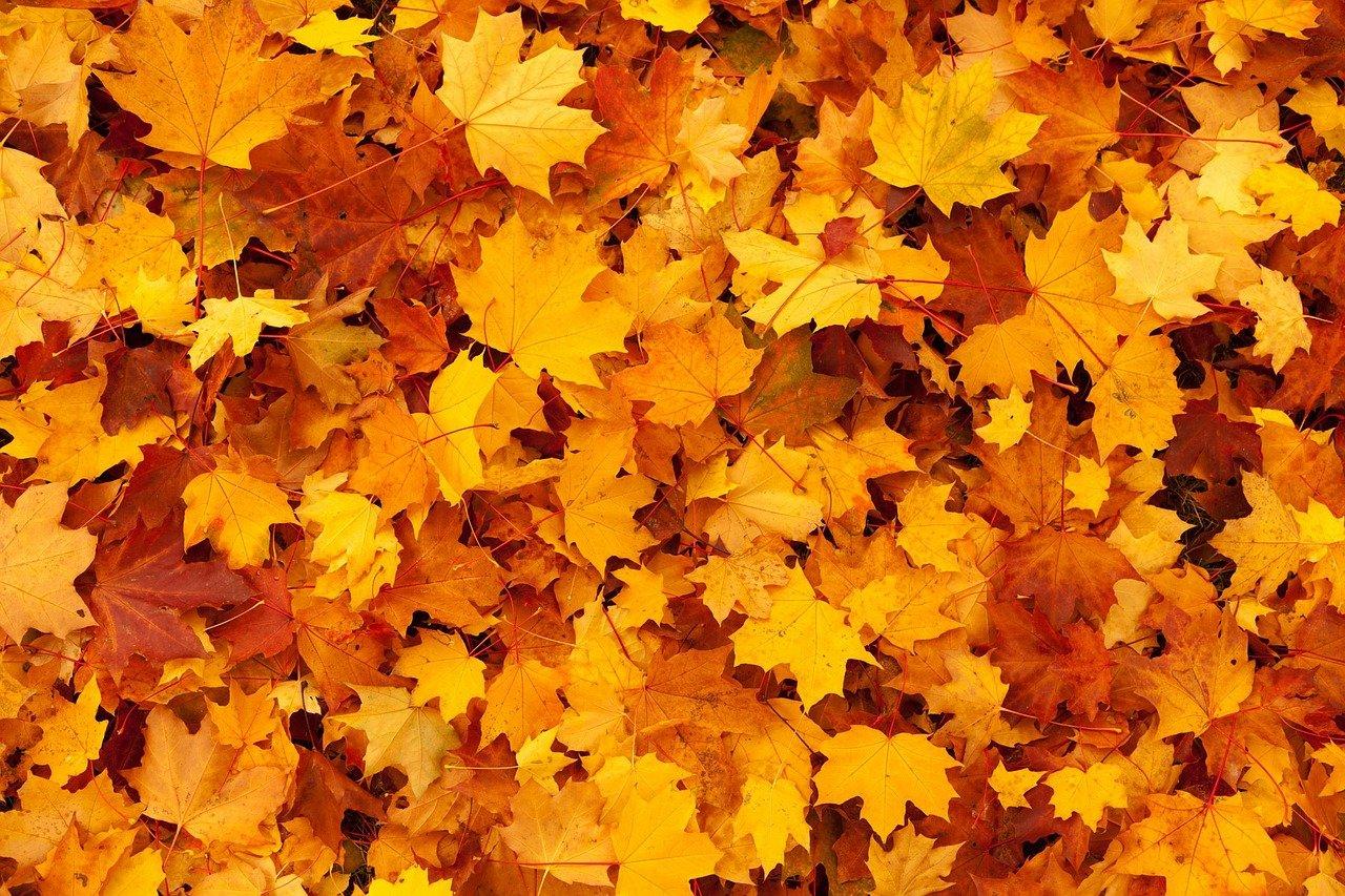 Wasserabdrehen, Mitgliederversammlung und Herbstfest am 23.10.21