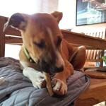 Hund aus Spanien, adoptieren