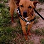 Hund aus Spanien, Hund adoptieren, Tötungsstation
