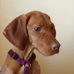 Tierschutzhund,Adoption, Tötungsstation