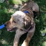 Tier aus Rumänien retten, adoptieren, Tierschutz