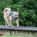 Hund Rumänien adoptieren, Tierschutz