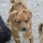 Rumänien, Tierschutz, Hund adoptieren