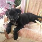 Hund aus Spanien adoptieren, Tierschutz