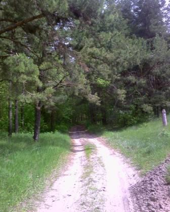 дорога Зольный сад